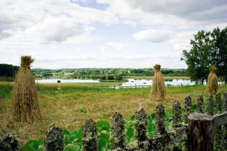 Rural landscape, hedge of wooden stakes overgrown with moss, sheafs of hay, large forks of cabbage growing in the garden and a river with a mill in the background
