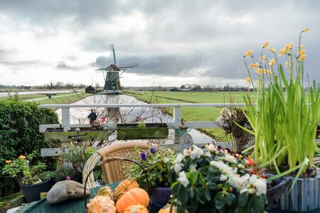 Picturesque Dutch landscape with a view of the mill through the canal with water. A fence in front of a table decorated with autumn pumpkins, yellow daffodils, flowers and a wicker chair