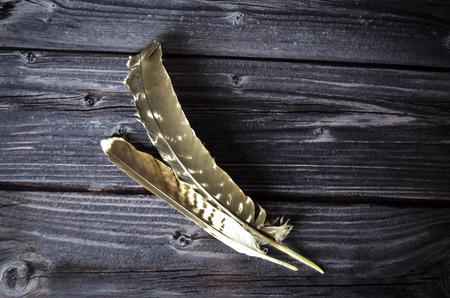 bird feathers: Bird feathers