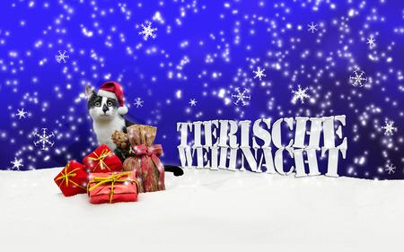 tienda de animales: Tierische Weihnacht Cat Navidad Nieve Pet Shop azul