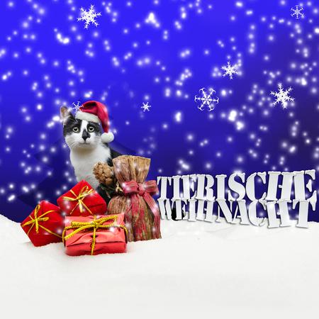 pet shop: Tierische Weihnacht Cat Christmas Snow Pet Shop blue