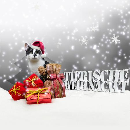 tienda de animales: Tierische Weihnacht Cat Navidad Nieve Pet Shop gris