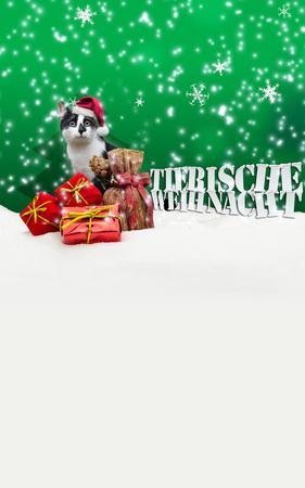 pet shop: Tierische Weihnacht Cat Christmas Snow Pet Shop green Stock Photo