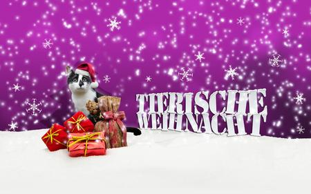 pet shop: Tierische Weihnacht Cat Christmas Snow Pet Shop pink