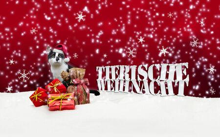 tienda de animales: Tierische Weihnacht Cat Navidad Nieve Pet Shop rojo Foto de archivo