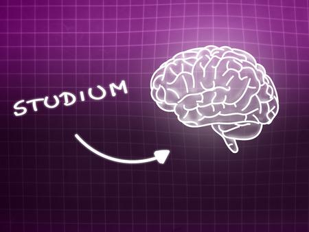 creativ: Studium brain background knowledge science blackboard pink light