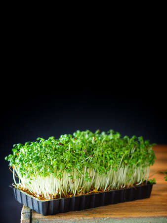 Green fresh cress on wooden table with black background. Stock Photo