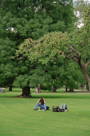 Two students are getting new ideas under a pear-tree photo