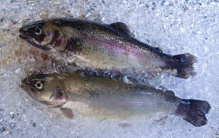 visboer: Twee nieuwe vissen worden in de ijs kast gekoeld.