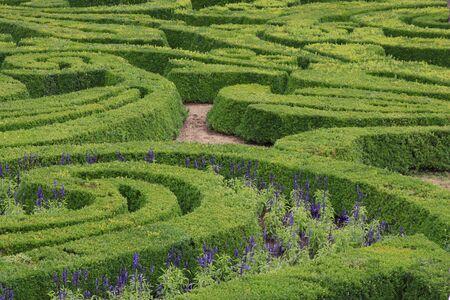 Green ornamental maze in the formal garden. photo