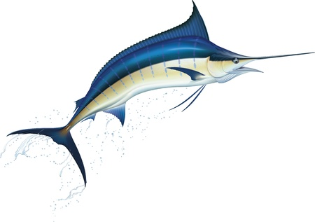 aquatic: Jumping blue marlin  Realistic vector illustration