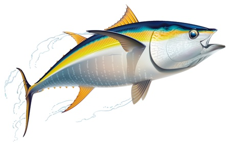 Yellowfin tuna in fast motion  Realistic vector illustration
