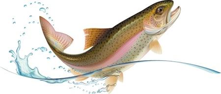 La trota iridea è il salto con gli spruzzi d'acqua. Illustrazione vettoriale. Vettoriali