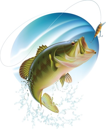 a freshwater fish: Largemouth bass is catching a bite and jumping in water spray  Layered vector illustration