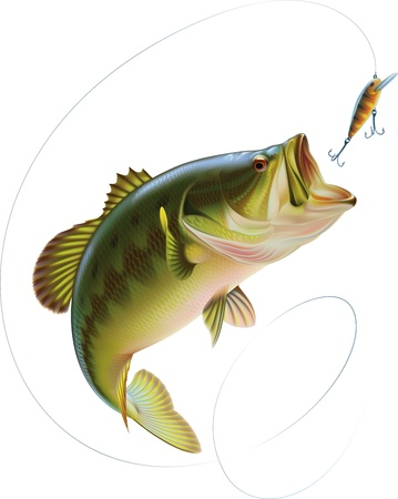 leaping: Largemouth bass is catching a bite and jumping in water spray  Layered vector illustration