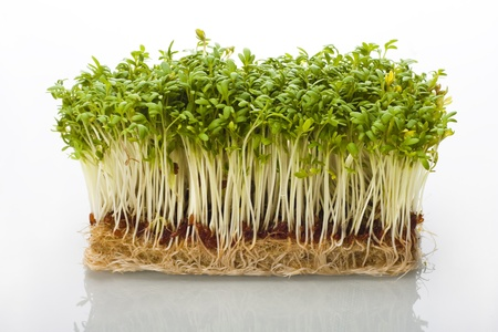Shoots of cress on white glossy background.