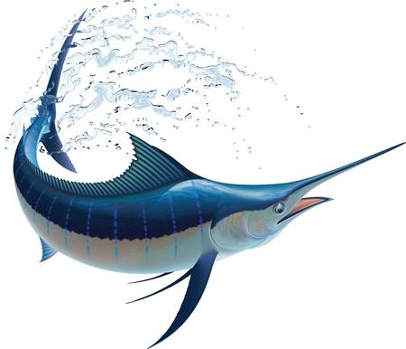 El marlín azul balanceándose en los pulverizadores de agua aisladas sobre fondo blanco
