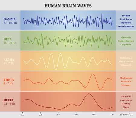 Human Brain Waves Diagram Chart Illustration Vettoriali