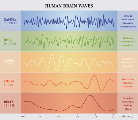 vague: Vagues de cerveau humain Schéma Tableau Illustration