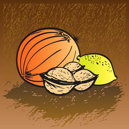friendliness: Conjunto de frutas - melón, nueces ilustración, dibujados a mano de limón Vectores