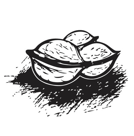 walnut: 3 Walnuts in Black and White Hand-drawn illustration