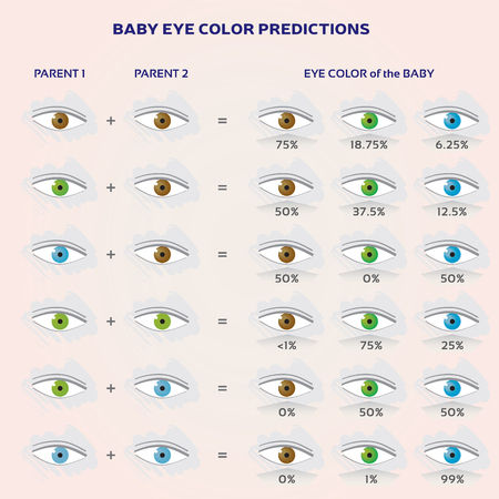 Baby Eye Color Prediction Chart - Icons in Blue, Green and Brown