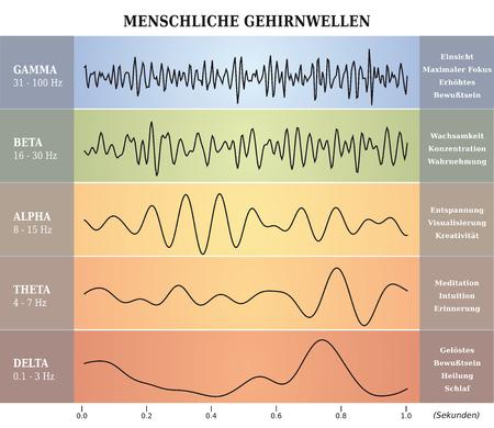 Human Brain Waves Diagram / Chart / Illustration in German Ilustração