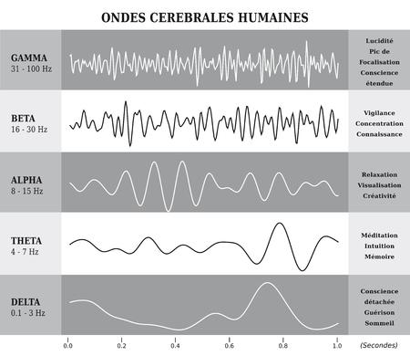 人間の脳波図  チャート  フランス語のイラスト - 白黒
