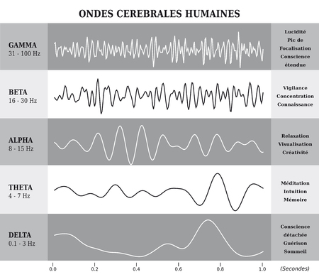 Human Brain Waves Diagram / Chart / Illustration in French - Black and White