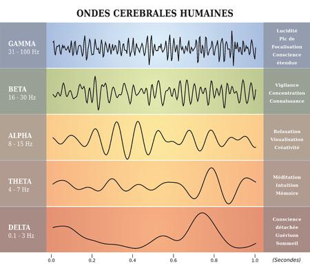 Human Brain Waves Diagram / Chart / Illustration in French Ilustração