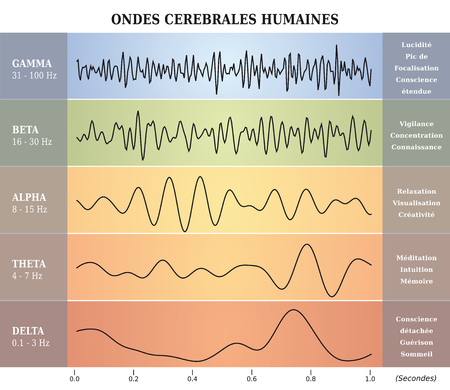 Human Brain Waves Diagram  Chart  Illustration in French