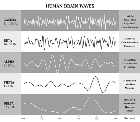 Human Brain Waves Diagram / Chart / Illustration in English - Black and White