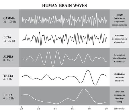Human Brain Waves Diagram  Chart  Illustration in English - Black and White Illustration