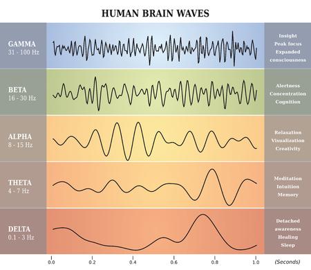 Human Brain Waves Diagram  Chart  Illustration en français Ilustração