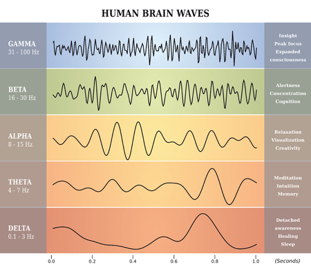 Human Brain Waves Diagram  Chart  Illustration en français Illusztráció