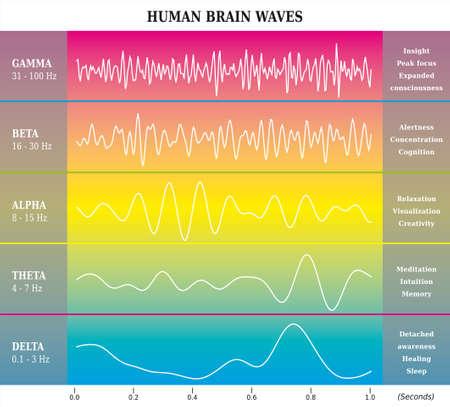 Human Brain Waves Diagram in Rainbow Colors with Explanations - Alpha Beta Gamma Theta Delta Frequencies Illustration