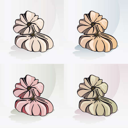 Garlic - Vegetable 4 Original Hand Drawn Illustrations on different Backgrounds - Natural and Healthy Food Icon
