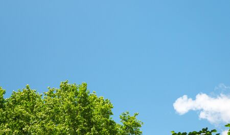 blue sky with one cloud and green leaves. Stock Photo