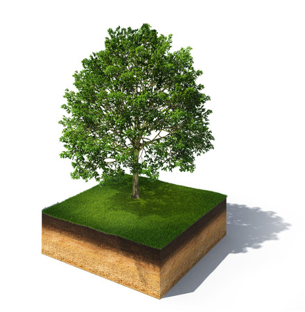 3d rendered illustration of cross section of ground with tall tree isolated on white