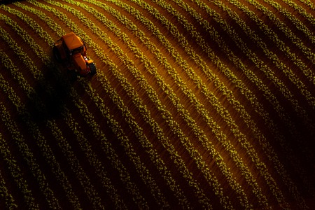 a crop: 3d illustration of aerial view of field with rows of growing crop or vegetables and tractor ploughing it. Sunset or sunrise light