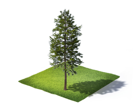 3d rendered illustration of sliced ground with grass and tree isolated on white background Standard-Bild