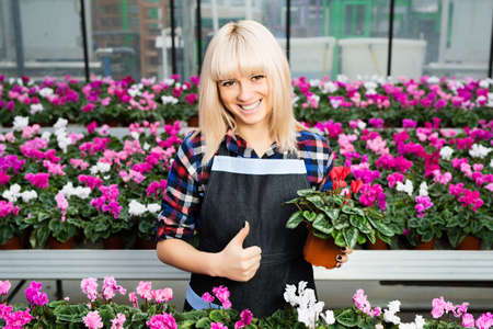 smiling woman in a greenhouse: cheerful woman gardener worker showing thumbs up, holding poted flower and standing in a flower shop.