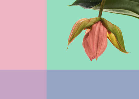 unusual flower on a multi-colored background, greeting spring card