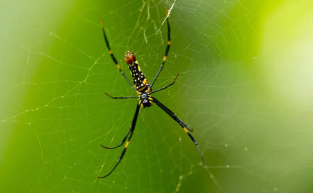 Close-up shot of big spider on a web. Green background. Wildlife nature of insects. Detail macro picture.