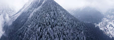 Aerial top view to snowy moutain trees of winter pines in the mountains. Panoramic shot. Middle of the winter. High needles in the forest. Beautiful nature landscape from drone. Dombai, Russia.