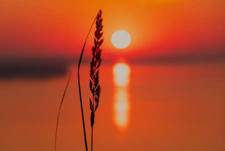 Beautiful low key sunrise with early sun and spikelet. Spica and sunset above the horizon. Nature landscape at the morning. Meditation and relaxation.