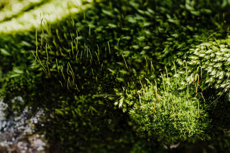 Moss makes its way through the asphalt. Island on earth. Microlife and microgreens. Desire for life. Purposefulness. Through obstacles to success. Ecological cconcept.