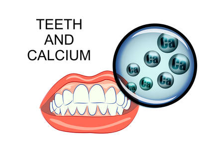 gums: illustration of healthy gums and teeth. healthy teeth and calcium
