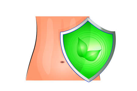 sphincter: illustration of a female abdomen and of the shield that protects Illustration