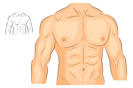 pectoral: illustration of a male body arms shoulders chest and abs. bodybuilding
